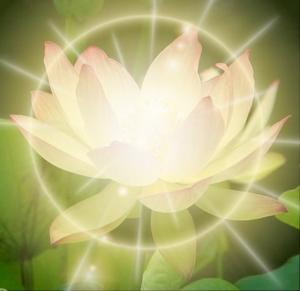 lotus brengt geluk